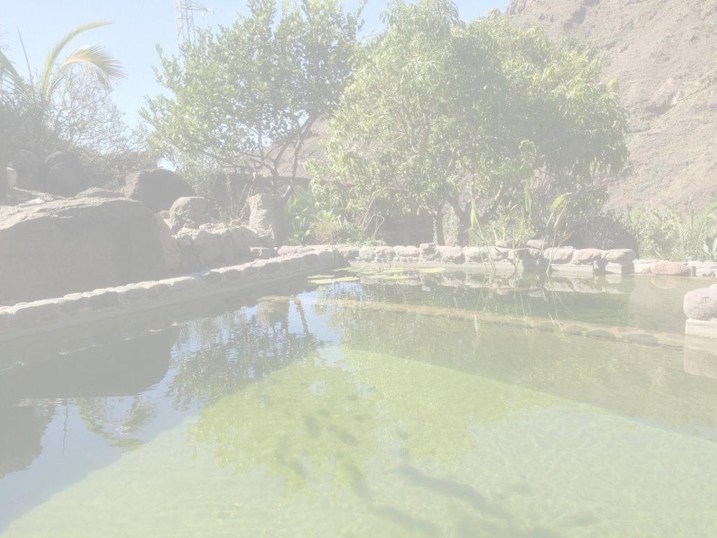 IOB pond 1