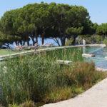 IOB Swimming Pond 1
